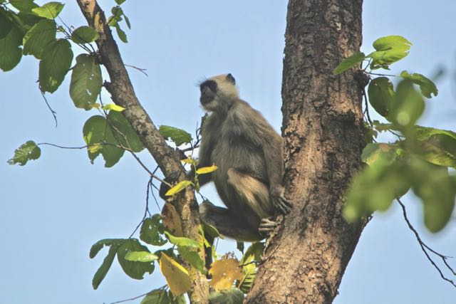 wildlife safar in india 1