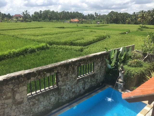 house for rent in ubud1