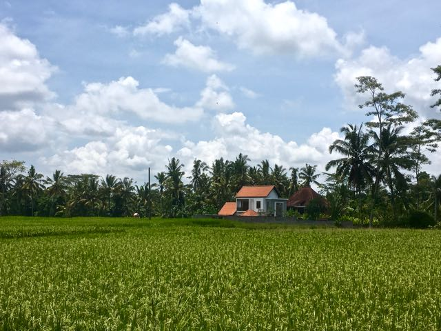 rent a house in ubud1
