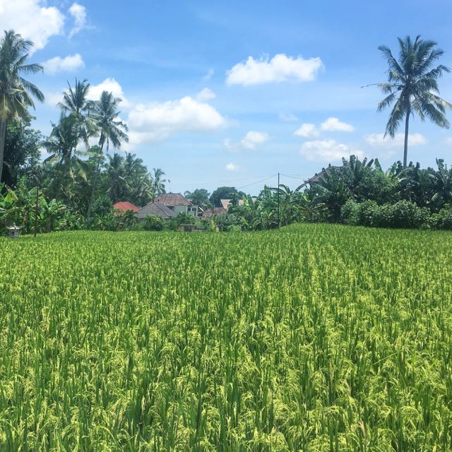 rent a house in ubud3
