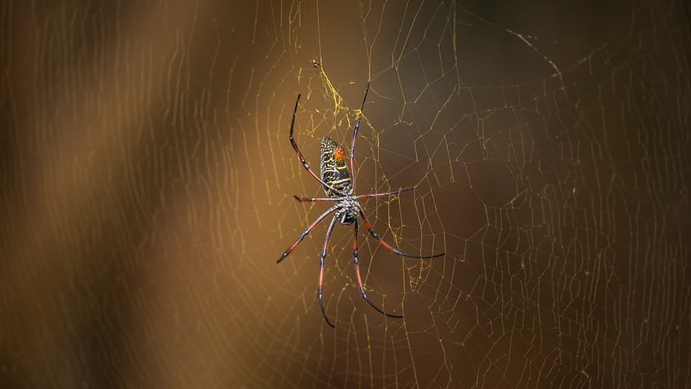 madagascar animals spider