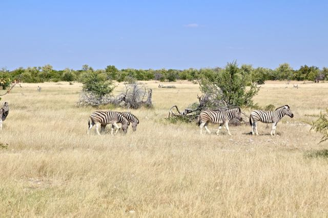 etosha national park game Drives