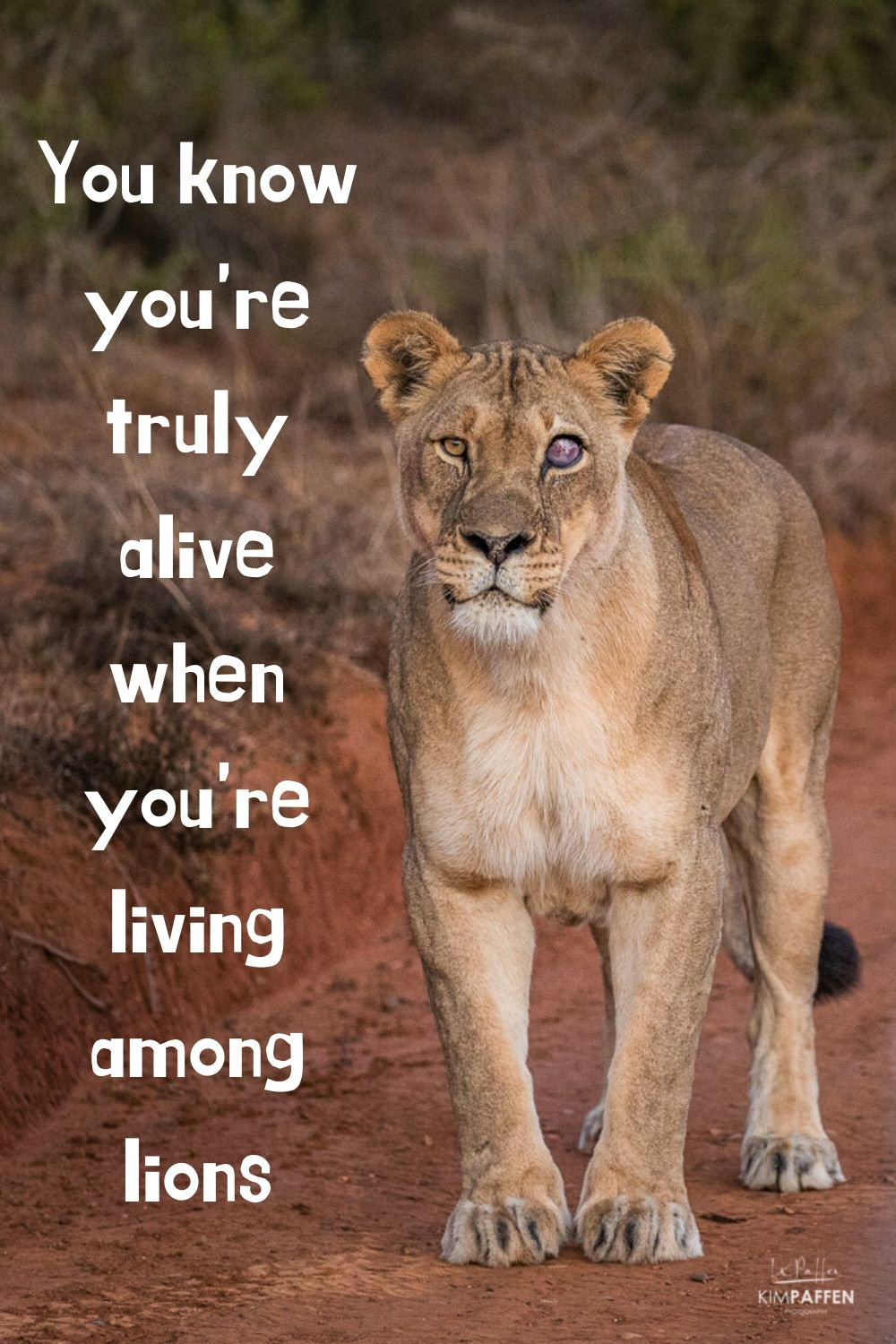 africa quotes about safari 1