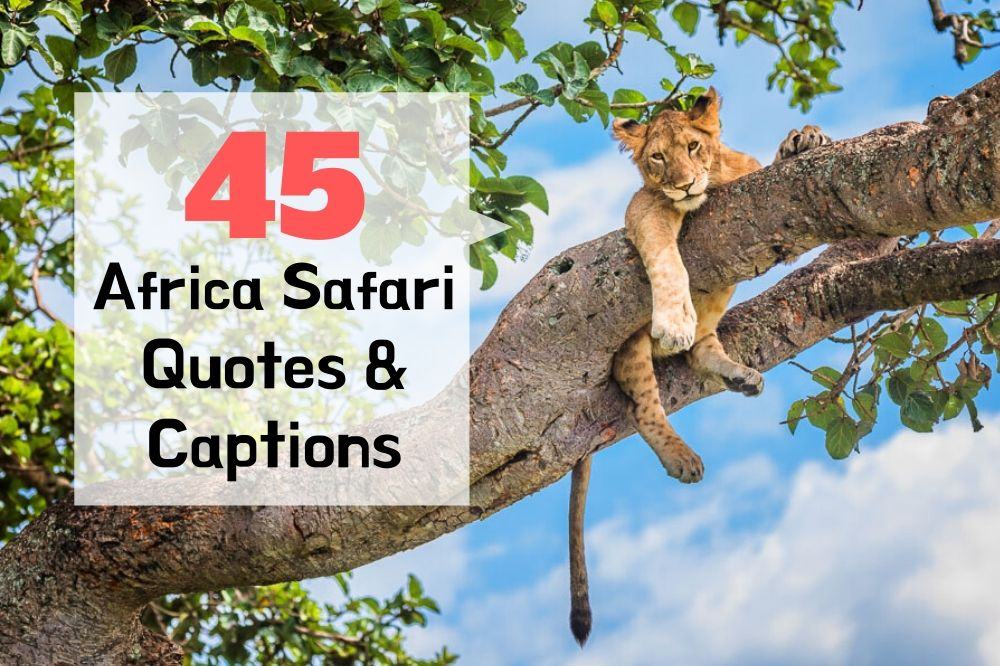 45 Africa Safari Quotes & Captions To Inspire You To Travel To Africa