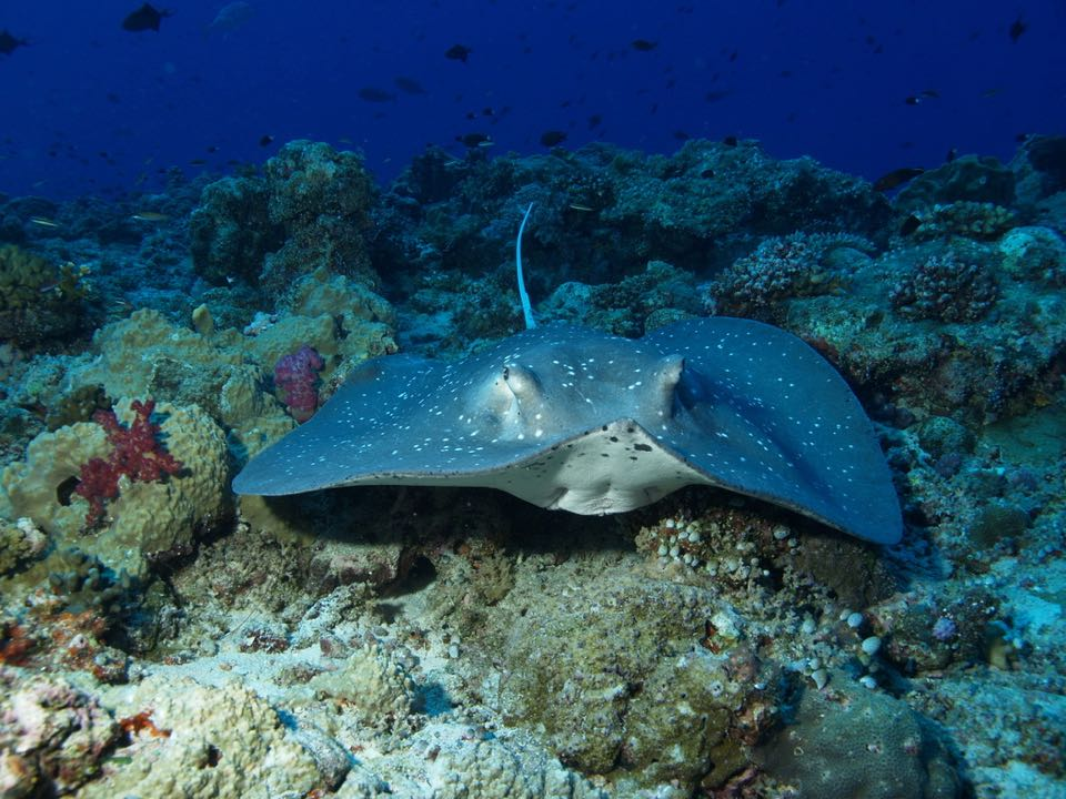 best scuba diving destinations in the world 2